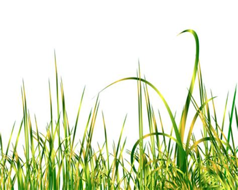 realistic green grass vector illustration ai svg eps