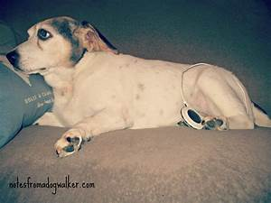 canine acl tear non surgical option