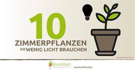 Pflanzen Wenig Licht by 10 Zimmerpflanzen Die Wenig Licht Brauchen