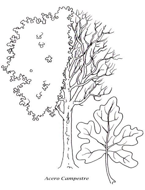 disegni da colorare alberi  piante disegni  bambini