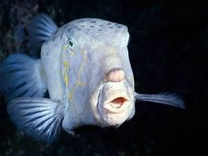 Deep Sea Fish Wallpaper | Monsters | Pinterest | Deep sea ...