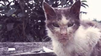 cat symptoms 3 common symptoms of cat rabies petcarerx