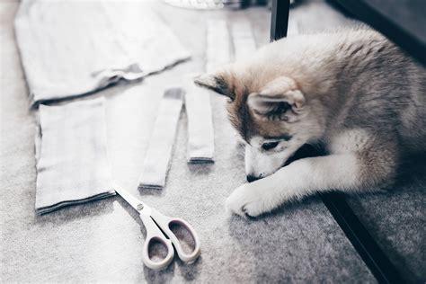 Schnüffelteppich Für Hunde Selber Machen? So Geht's
