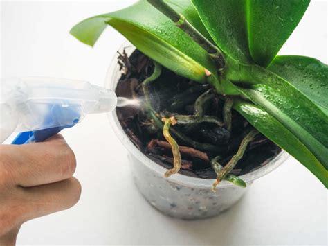 kaffeesatz als dünger für orchideen kaffeesatz als d 252 nger verwendung vorteile des hausmittels plantura