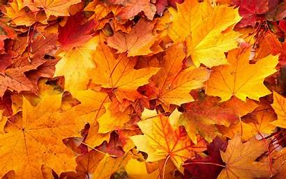 Leaves Fall Desktop Wallpapers Autumn Backgrounds Resolution