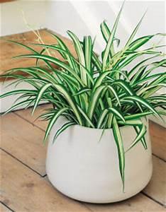 Grande Plante D Intérieur Facile D Entretien : plante vertes interieur facile d entretien l 39 atelier des ~ Premium-room.com Idées de Décoration