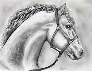 Horse Drawing In Pencil By Deedeedee123