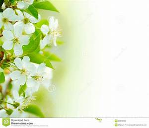 Spring Flowers White Background