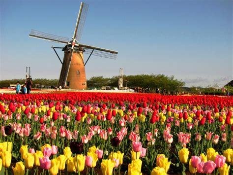 menakjubkan ladang ladang bunga terindah  dunia