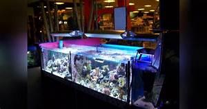 Hobby Center Göttingen : 3 g ttinger meerwassertreffen am ~ Watch28wear.com Haus und Dekorationen