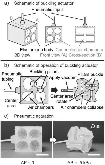 Schematics of a pneumatic buckling actuator. (a) actuator