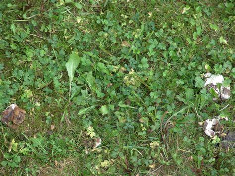 Pilze Im Garten Hund by Pilz E Im Garten Rasen Bestimmen Pilzbestimmung U