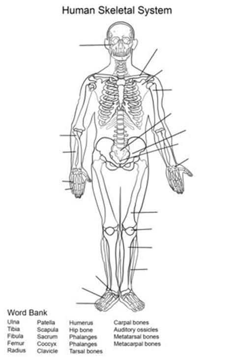 human skeletal system worksheet coloring page skeletal system worksheet anatomy coloring book