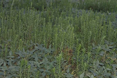 time  act  herbicide resistant weeds