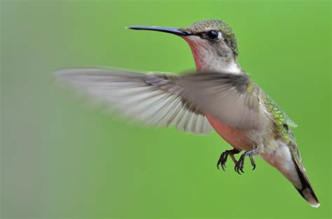 feed the hummingbirds before their big trip south red