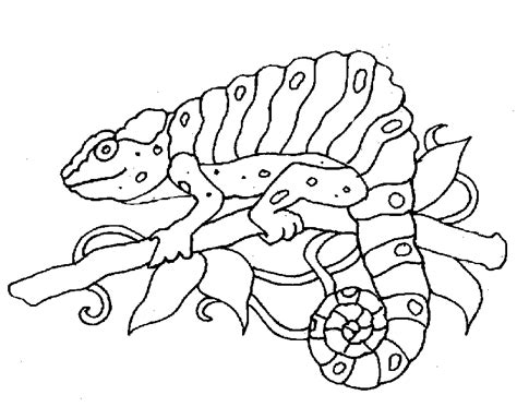 zoo animals coloring pages bing images zoo animal