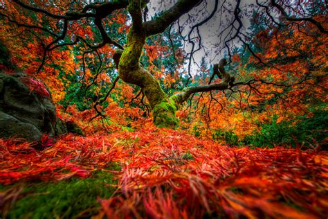 portland japanese garden maple tree by alierturk on