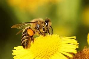 Mittel Gegen Bienen : heilmittel der bienen propolis tinktur infos und wirkung ~ Frokenaadalensverden.com Haus und Dekorationen