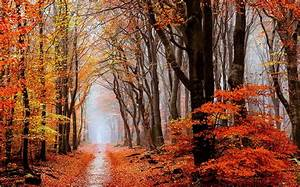 nature, , landscape, , fall, , forest, , leaves, , mist, , path, , trees, wallpapers, hd, , , , desktop, and, mobile