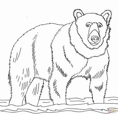 Bear Coloring Brown Panda Rysunek Disegni Wojtek