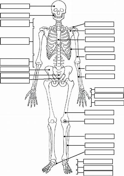 Anatomy Coloring Physiology Pages Human Printable Getcolorings