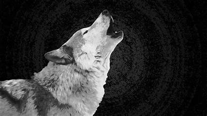 Wolf Wallpapers Howling 3d Trippy Backgrounds Definition