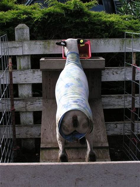 build  goat creep feeder woodworking projects