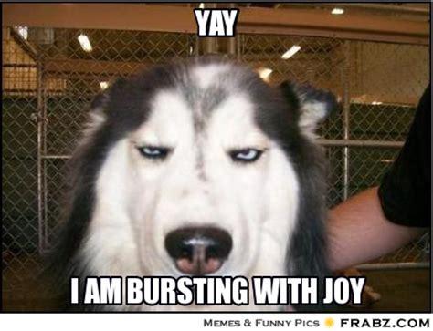 Yay Meme - image gallery sarcastic yay
