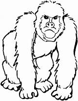 Gorilla Cartoon Clip Cliparts Coloring Clipart Attribution Forget Link Don sketch template