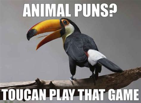 Funny Pun Memes - fridayfrivolity hilarious animal puns have a laugh plus linky devastate boredom