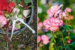 Rosen Winterfest Machen : winterschutz f r rosen gartenzauber ~ Orissabook.com Haus und Dekorationen