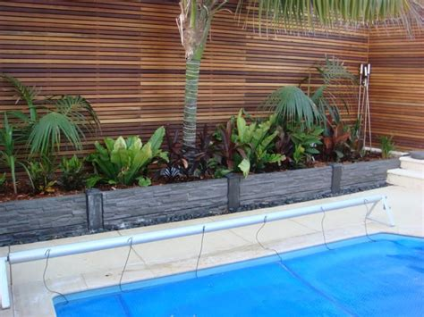 best plants around swimming pool birds nest palms and cordylines pool pinterest