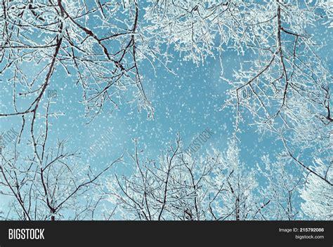 tree tops template powerpoint template winter landscape winter frosty tree