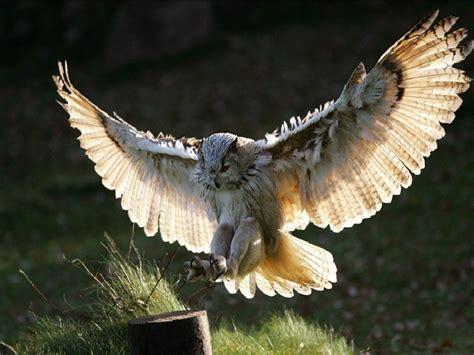 Great Horned Owl « Galaxy Dreams
