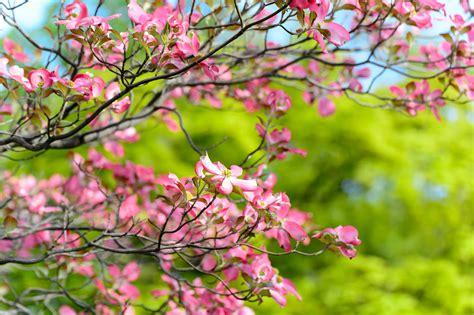 Free Images : landscape tree branch sky leaf flower