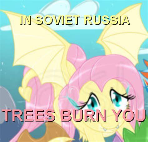 Mlp Fluttershy Meme - my little pony fluttershy and luna memes