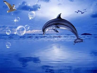 Dolphin Sea Dolphins Dolfijnen Aim4beauty Bezoeken Aparks45