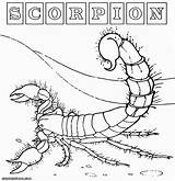 Scorpion Coloring Pages Desert Colorings Print Animal sketch template