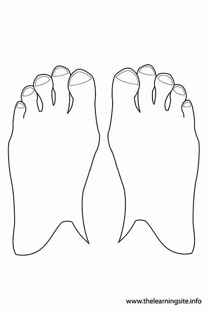 Outline Feet Coloring Parts Toes Template Pages
