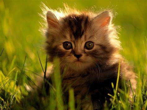 cherche je recherche un chaton a adopter gratuit 93400