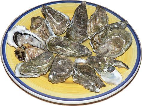 shellfish wikipedia