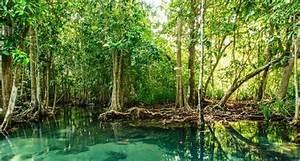 Hutan Mangrove Jenis Hutan Berdasarkan Sifat Tanah
