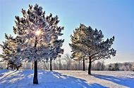 Winter Nature Snow Trees