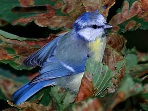 Forest and Field Bird Wallpaper  Bird