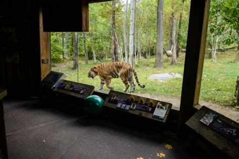 NYC - Bronx - Bronx Zoo: Great Indian Rhinoceros Statue ...