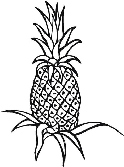 pineapple coloring pages getcoloringpagescom