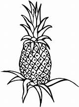 Pineapple Coloring Plant Drawing Clipart Outline Field Line Unripe Printable Panda Clipartmag Advertisement sketch template