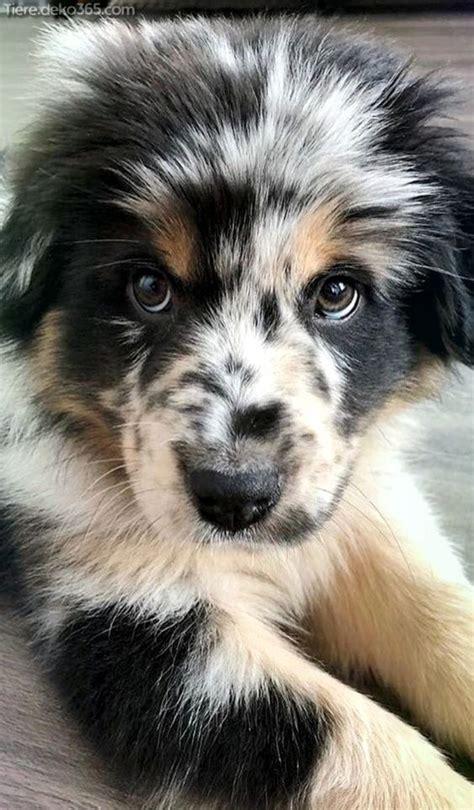 40 ergebnisse für süße hunde. Tolle kleine Hunderassen jenseits von süß - Hunde Lustig