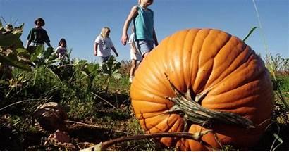 Pumpkin Patch Corn Maze