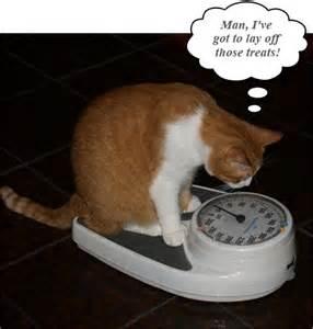 cat scale my teardroppin